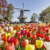 CROISIÈRE EN HOLLANDE // REPORTE
