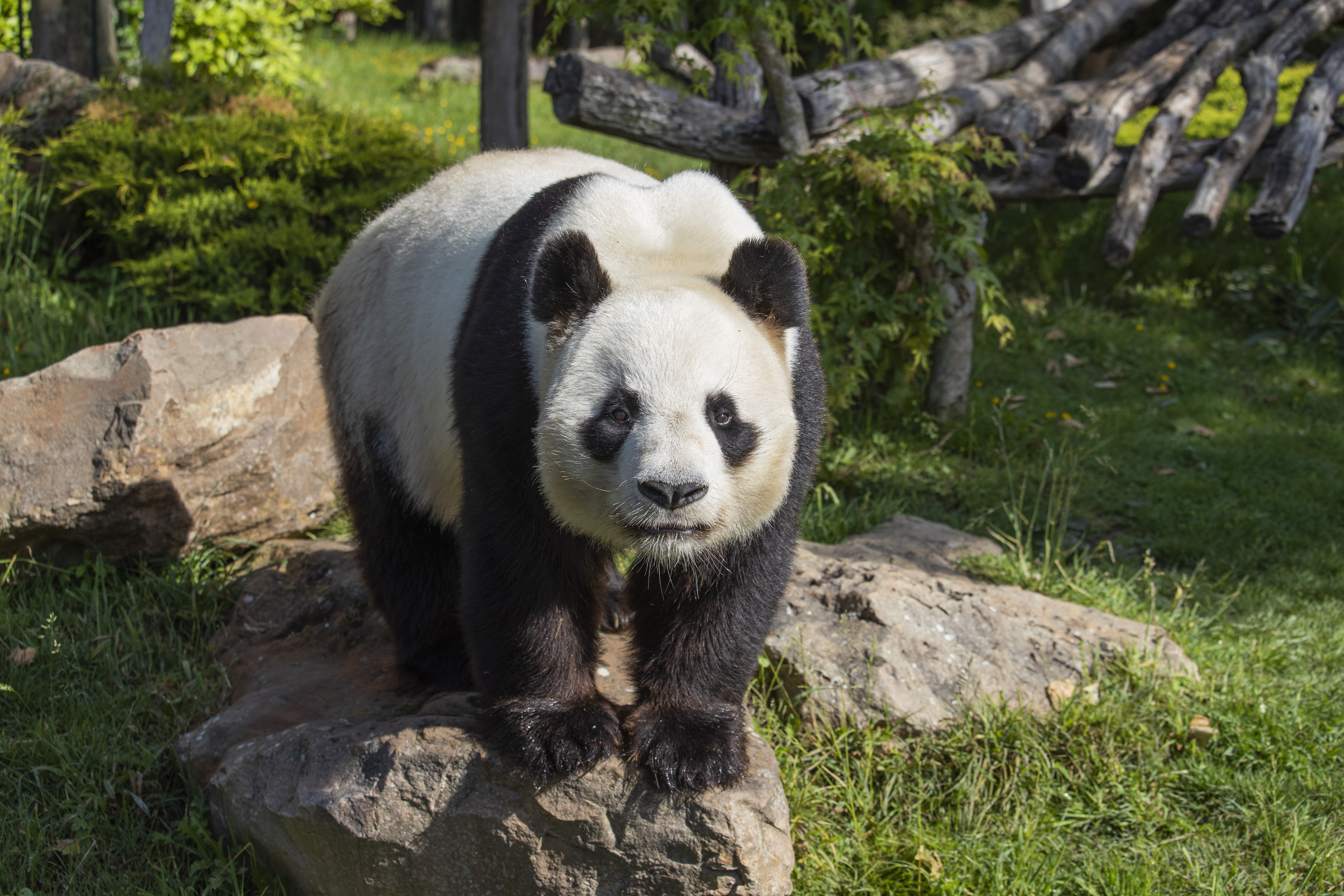 p15 Zoo Beauval 1